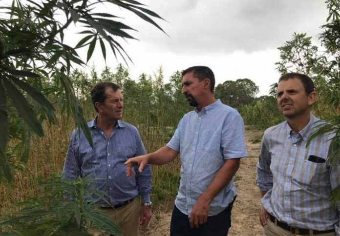 Industrial hemp in South Australia