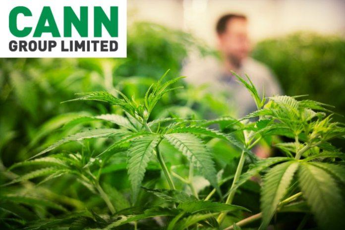 Cann Group and Aurora Cannabis