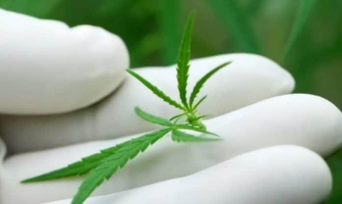 Cannabis patient database