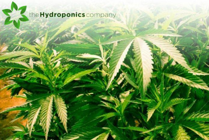 THC - cannabis clinics