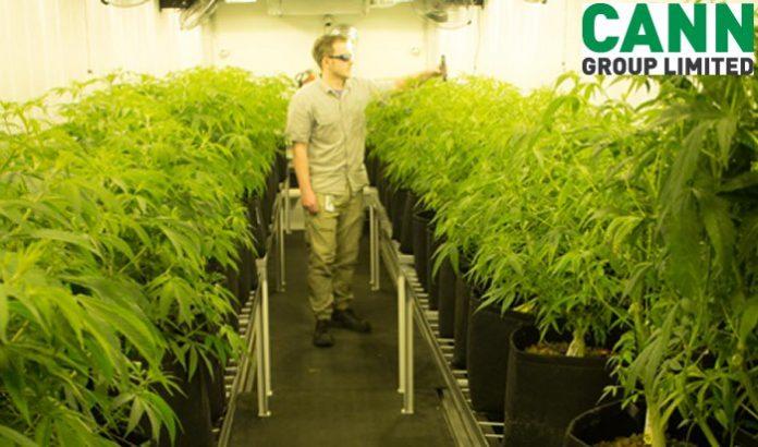 Cann Group - medicinal cannabis