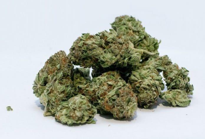 Cannabis in South Australia