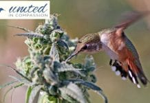 United In Compassion - Australian 2019 Medical Cannabis Symposium