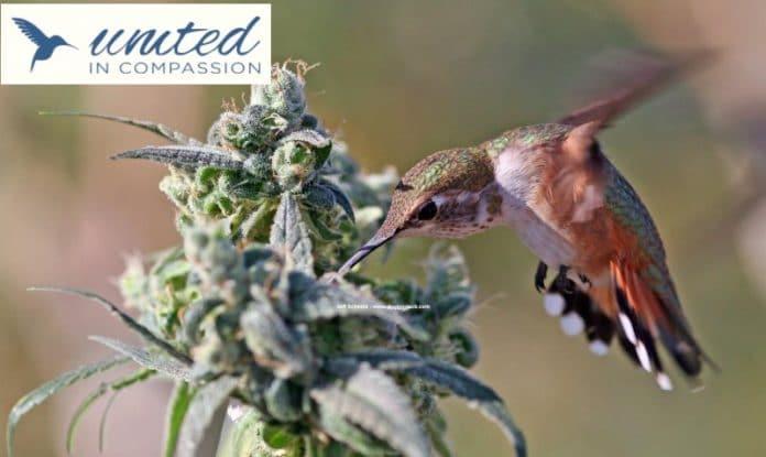 United In Compassion - Australian 2019 Medical Cannabis Symposium