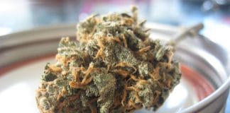 Medical cannabis in New Jersey