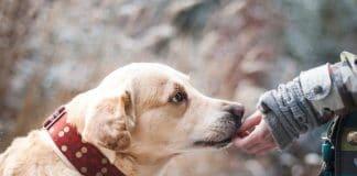 California vets - cannabis and pets