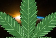 Industrial hemp in space