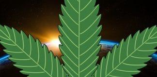 Industrial hemp in space