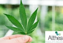 Althea cannabis manufacturing licence