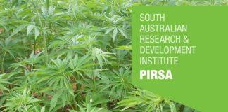 Industrial hemp trial - South Australia