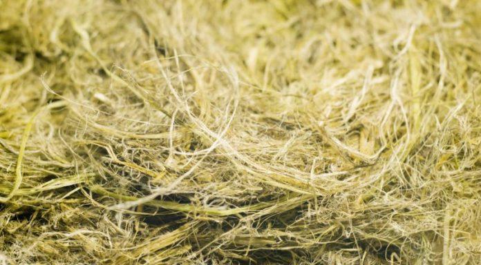 Hemp fibre
