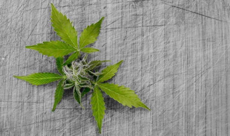 New NZ Medical Cannabis Poll Results