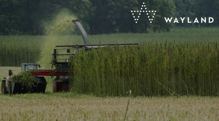 Wayland Group, Tropicann cannabis deal