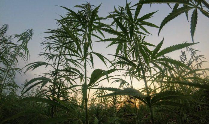 Industrial hemp and FDA regulations