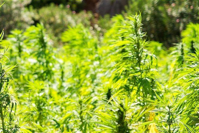 Industrial hemp rules - Illinois