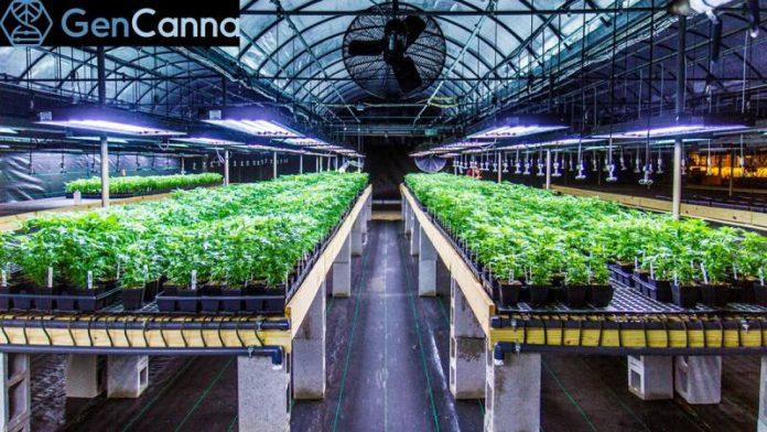 GenCanna's 0.0% THC industrial hemp