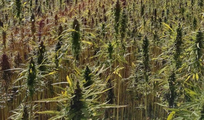 Industrial hemp bill - South Dakota