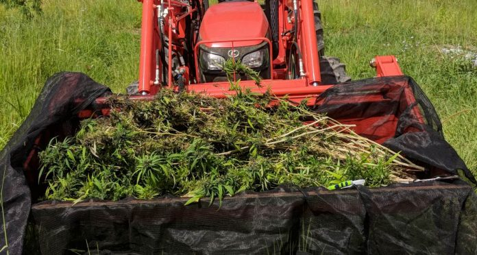 Hemp theft in South Australia