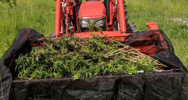 """""""Relentless"""" Hemp Thefts Discourage South Australian Growers"""