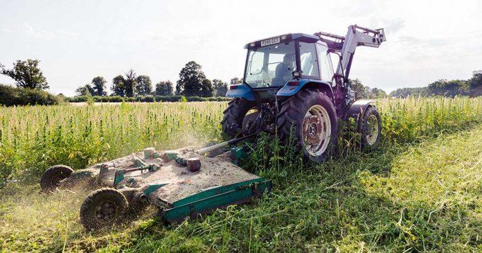 Hempen destroying crop