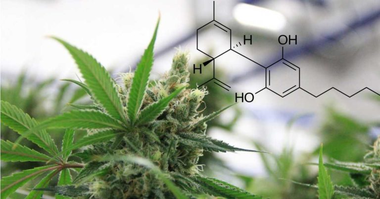 Another Study Indicating CBD Can Reduce Opioid Intake