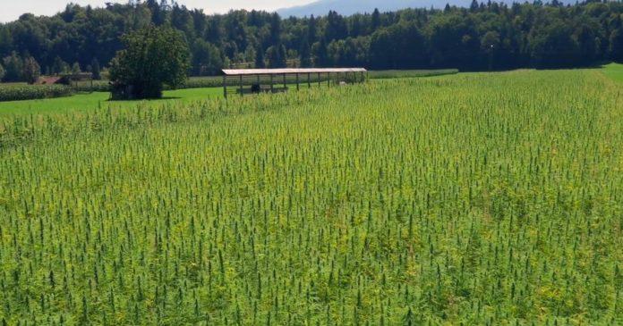 Puro cannabis crowdfunding