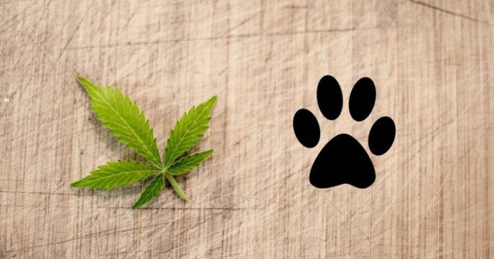 Dog overdose - CBD