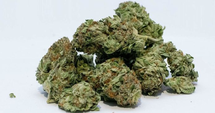 Cannabis attitudes in New Zealand