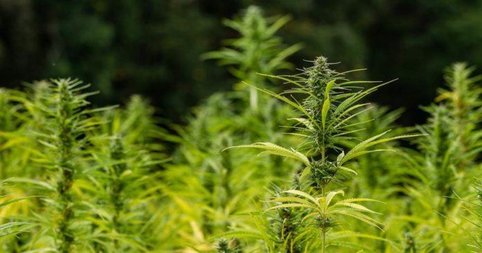 Maine and Missouri hemp plans