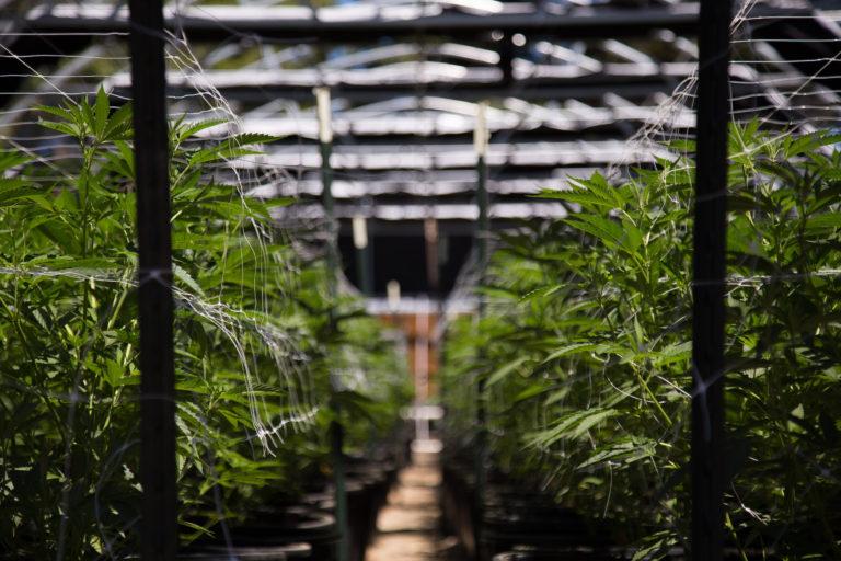 Canopy Growth founder joins ASX listed Creso Pharma
