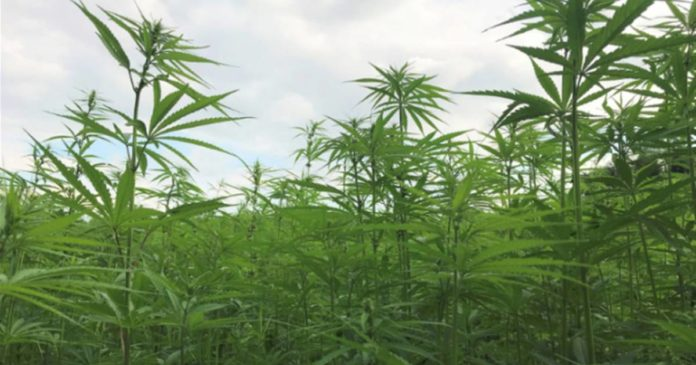 Pennsylvania hemp season 2021
