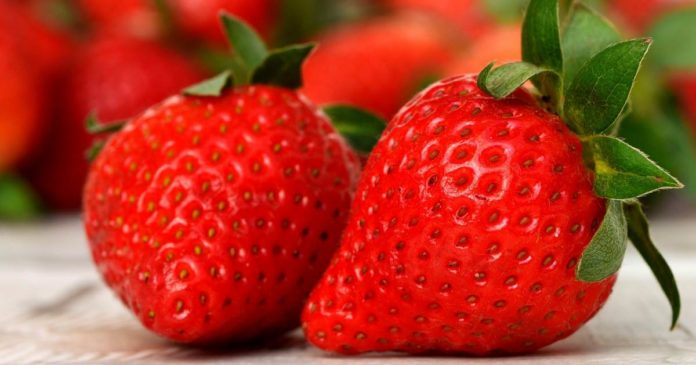 Cannabidiol extends shelf life of strawberries
