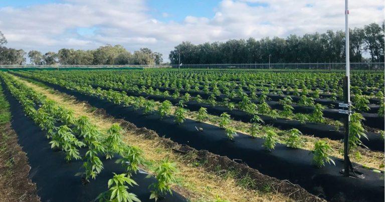 Australia's ECS Botanics To Acquire Medical Cannabis Cultivator