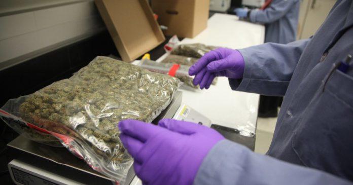 NIST Cannabis Testing