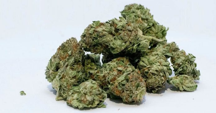 Germany's medical cannabis flower imports