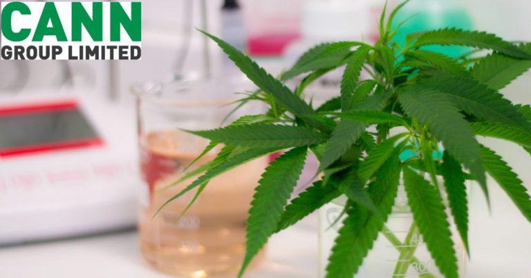 Cann Group Collaborates On S3 CBD Medicine Development