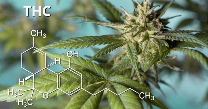 Hemp THC levels - USDA