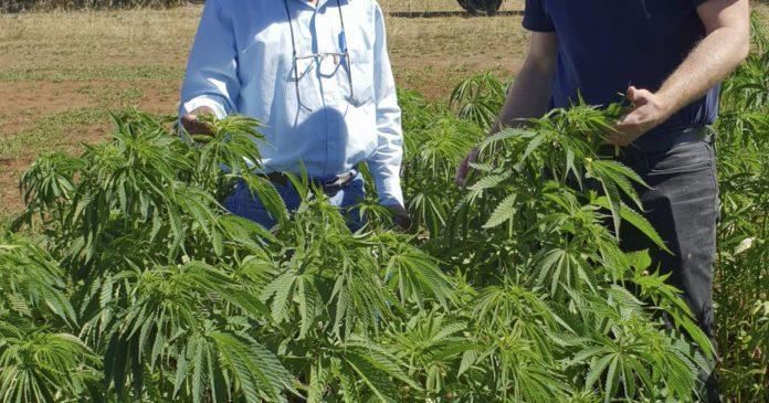 Western Australia industrial hemp trial