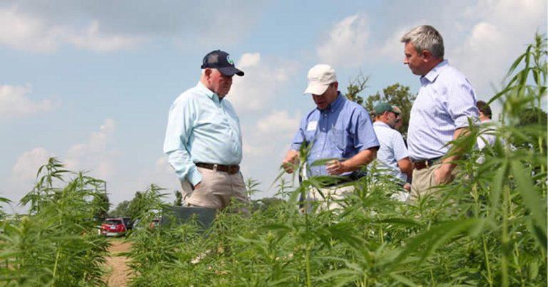 Kentucky To Submit New State Hemp Plan To USDA