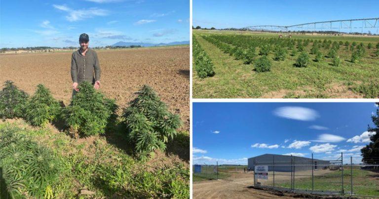 Another Step For ECS Botanics' Major Tasmanian Cannabis Expansion