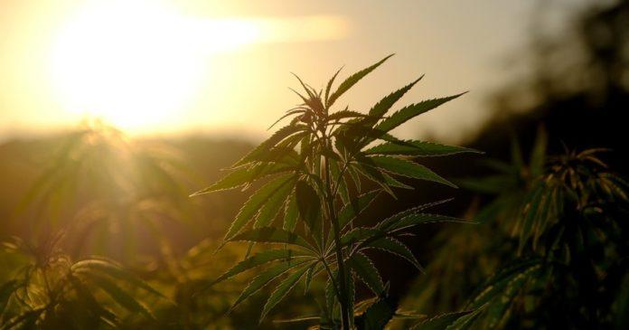 Massachusetts and cannabis