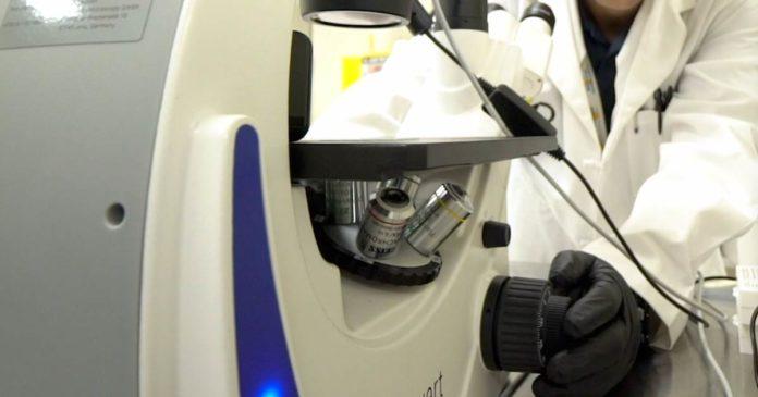 Medpharm - cannabis potency study
