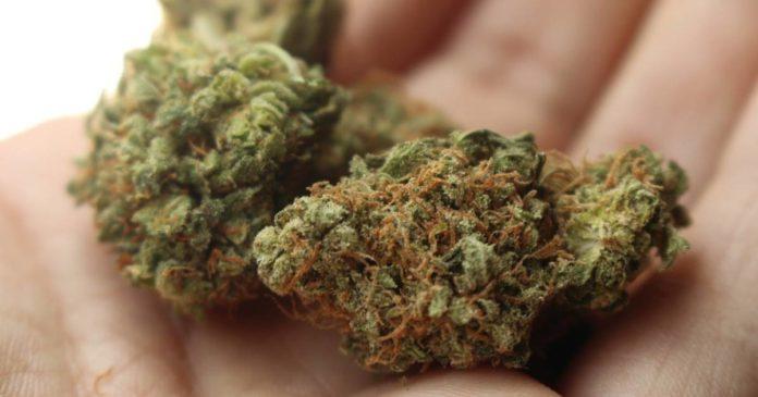 Medicinal cannabis in New Zealand