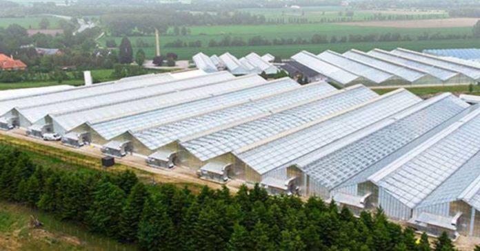 Little Green Pharma Denmark cannabis facility