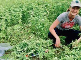 WA hemp livestock trial