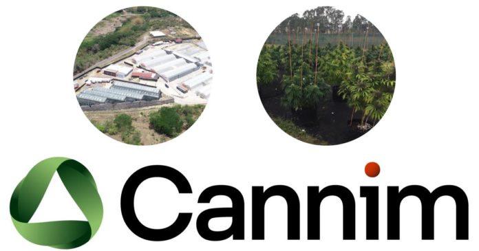 Cannim - medical cannabis Australia