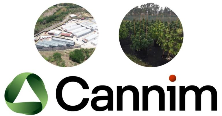 Australian Company Exports Jamaican Cannabis Flower To Germany