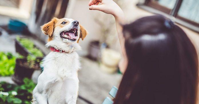 Veterinary Cannabis Society