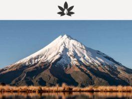 Greenfern - NZ medicinal cannabis